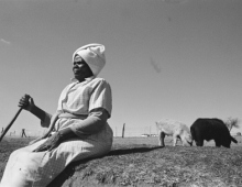 Woman with cattle in the background