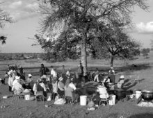 People under a tree
