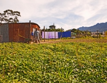 House on a farm 1